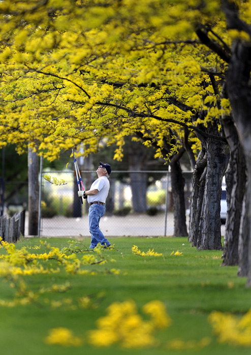Ben Cook with the Kennewick Parks Department trims some low hanging branches on some trees at Eastgate Park on Monday, April 28, 2014. Cook said he'll come back in about a month when the trees are in full bloom and trim the low hanging branches.