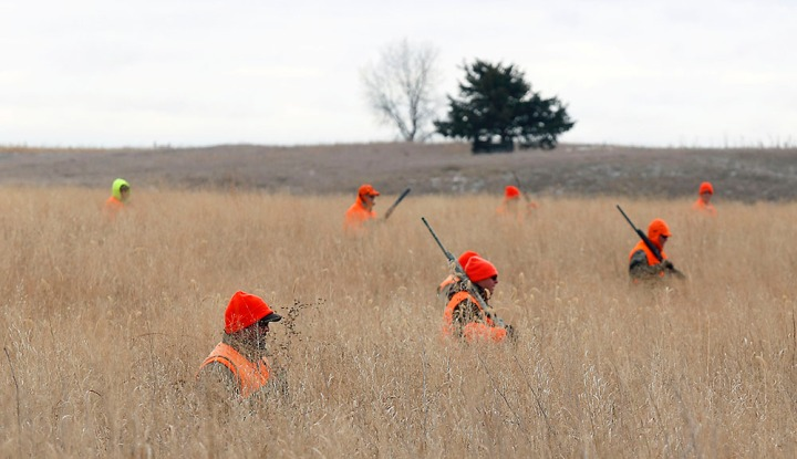 The hunters make their way through the CRP during a hunting trip at Firesteel Creek Hunting Lodge off HWY 281 on Tuesday morning near Plankinton. (Matt Gade/Republic)