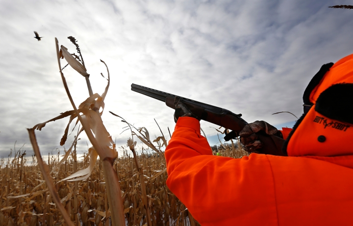 Terry Erwin, of St. Louis, Mo. shoots down a rooster pheasant as he and his friends took part in a hunting trip at Firesteel Creek Hunting Lodge off HWY 281 on Tuesday morning near Plankinton. (Matt Gade/Republic)