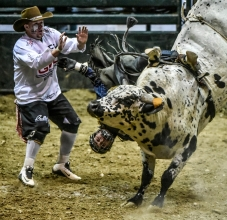 Dylan Madsen of Presho is caught on the rope by his boot while riding Speck during the Wilbur-Ellis Corn Palace Challenge on Saturday night at the Corn Palace. (Matt Gade/Republic)