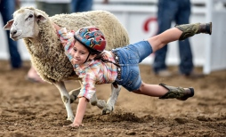 Seven-year-old Anna Castillo of Ethan slides off while taking part in the Muttin Bustin during the Scottie Stampede Rodeo on Saturday night in Scotland. (Matt Gade/Republic)
