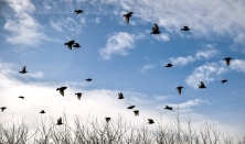 Blackbirds fly out of a group of trees on Monday afternoon east of Mitchell. Today's forecast is for mostly cloudy skies with a high near 26 and winds out of the north-northwest at 10 to 15 mph. (Matt Gade/Republic)