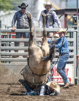 A horse does a somersault on Jacob Lewis, of Stephenville Texas, during the Saddle bronc as part of the Wessington Springs Foothills Rodeo on Sunday, May 29 at the Jerauld County 4-H arena. Neither the horse nor Lewis were injured and Lewis was given a re-ride after his first horse's somersault.