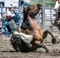 Miles Kreeger, of Lake Andes, and his horse both brace for a fall to the ground during the saddle bronc competition on the second day of the Wessington Springs Foothills Rodeo on Sunday, May 29 at the Jerauld County 4-H arena.
