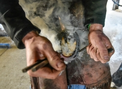 Chris Richards applies the hot horseshoe to Cactus causing smoke to rise on his hoof while tending to horses back in April at Cedar Ridge Equestrian Center north of Renner. Richards is a Farrier based out of Hurley serving clients in a 50 mile radius. (Date published: 6-10-2016)