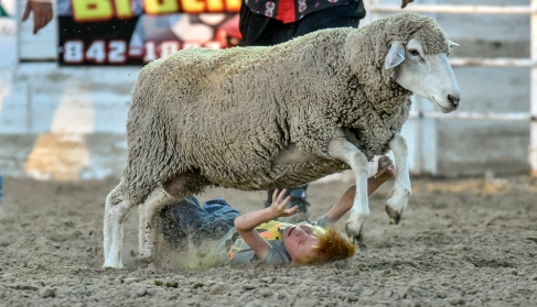Five-year-old Rostin Woodward of Winner, falls off the sheep while competing in the Mutton Bustin during the Winner Elks Benefit Rodeo on Saturday night at the Tripp County Fairgrounds in Winner. (Matt Gade/Republic)