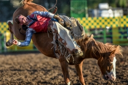 Troy Vaira, of Richey, Mont., competes in the bareback riding competition during the final night of the Corn Palace Stampede Rodeo on Sunday night at Horseman's Sports Arena in Mitchell. (Matt Gade/Republic)