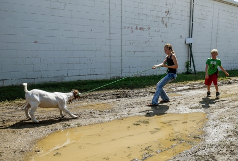 Anna Hawkins (13), of Wagner, helps her brother Allen (9) with a stubborn goat that didn't want to move so they could check him into for the 4H competition on Thursday, Sept. 1 as part of the State Fair at the State Fairgrounds in Huron.