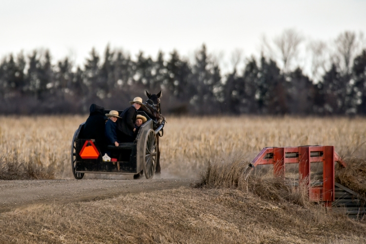 A group of Amish children race down 412th Avenue in a horse drawn carriage on Wednesday morning, a mile east of Tripp.