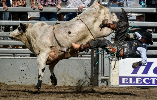 Dustin Thompson, of Mitchell, is thrown off while competing in the bull riding competition during the Wessington Springs Foothills Rodeo at the Jerauld County 4-H Grounds.