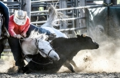 Mike Kuka, of Maple Plain, Minn., is brought down as his horse is undercut by the steer Kuka was attempting to steer wrestle during the Wessington Springs Foothills Rodeo at the Jerauld County 4-H Grounds.