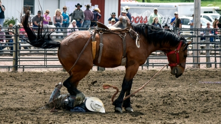 Sam Bell, of Sebeka, Minn., is stepped on by his horse after falling in the saddle bronc competition during the Wessington Springs Foothills Rodeo at the Jerauld County 4-H Grounds.