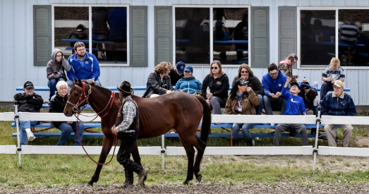 Joe Thorne walks Quick Cielo inside the Paddock in front of club house members before Quick Cielo competes in the Prairie Hill Farms Blanket Feature race as part of the Pari-Mutual Horse Races at the Brown County Fairgrounds on Sunday in Aberdeen.
