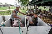 14-year-old Rylee Schultz, left, helps Quinton Berg, 11, both of Emery, wrestle his pig down off the stall while Schultz rinses off his own pig while getting ready to show off their pigs during the Hanson County 4-H Achievement Days on Monday afternoon in Alexandria.