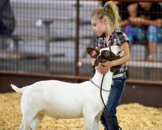 Calli Berwald, 9, from North Davison County near Letcher, tries to hold her goat still while showing it off during the goat show as part of the Davison County 4-H Achievement Days at the Davison County Fairground Complex on Thursday afternoon in Mitchell.
