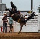 The horse Andrew Hall, of Wagner, is riding loses its footing and falls on its side with Hall on in its back while competing in the bareback competition during the Scottie Stampede Rodeo on Saturday.