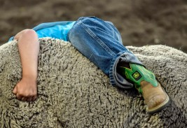 A kid hangs on tight while competing in the mutton bustin portion of the Corn Palace Stampede Rodeo on Sunday night at Horseman's Sport Arena in Mitchell.