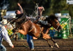 Cole Picton, of Marhall, Mo., competes in the bareback riding competition during the Corn Palace Stampede Rodeo on Sunday night at Horseman's Sport Arena in Mitchell.