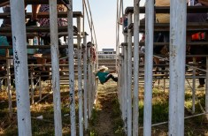 A kid climbs his way up to the walk way between the bleachers during the 28th Annual Burke Stampede Rodeo on Saturday night at the Burke, South Dakota Rodeo Arena in Burke.
