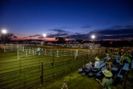 The crowd watches as Riley Page, of Colton, competes in the final competition of the night, bull riding, during the First Annual Charles Mix Saddle Club Rodeo on Friday night in Geddes.
