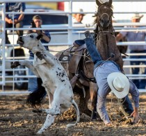 Blaise Steffen, of Gregory, gets tangled up in his rope while trying to compete in the calf roping event during the Winner Elks Benefit Rodeo on Sunday night at the Tripp County Fair and Rodeo Grounds in Winner. Steffen only received some bumps and bruises while the calf and horse were uninjured in the event.