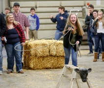 Wessington Springs freshman Angela Paulson tries roping the dummy while competing in the Ag Olympics in the Wessington Springs Ag building back in February as part of National FFA Week. (Matt Gade / Republic)